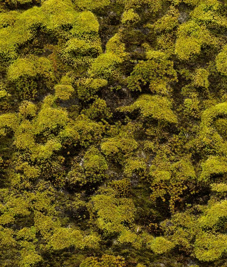Bryophyta wall mural from HD Walls Biophilic Design Collection
