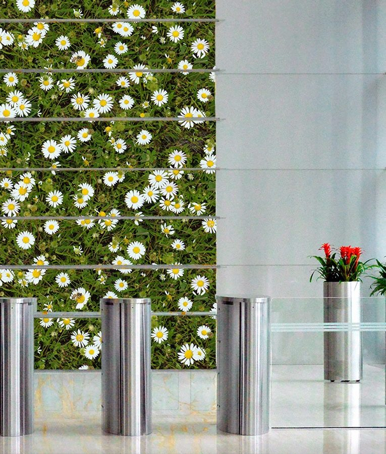 Morning wall mural from HD Walls Biophilic Design Collection