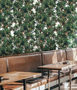 Pico wall mural from HD Walls Biophilic Design Collection